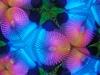 Psychedelisch, Bild 22